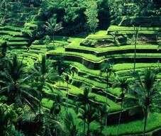 Endonezya Hakkında Bilinmesi Gerekenler