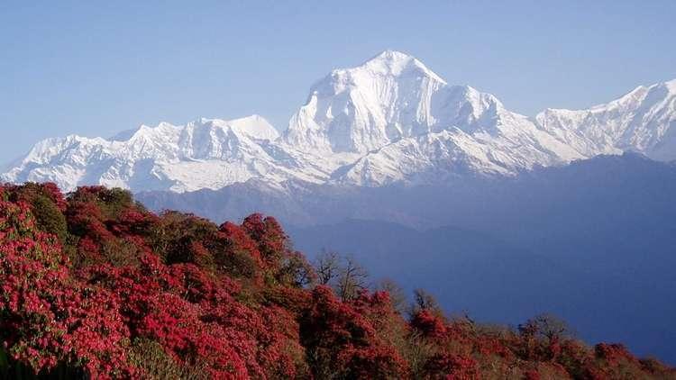 Nepale Varış