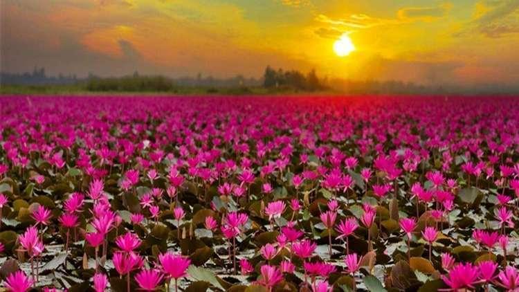 Tayland Lotus Gölü