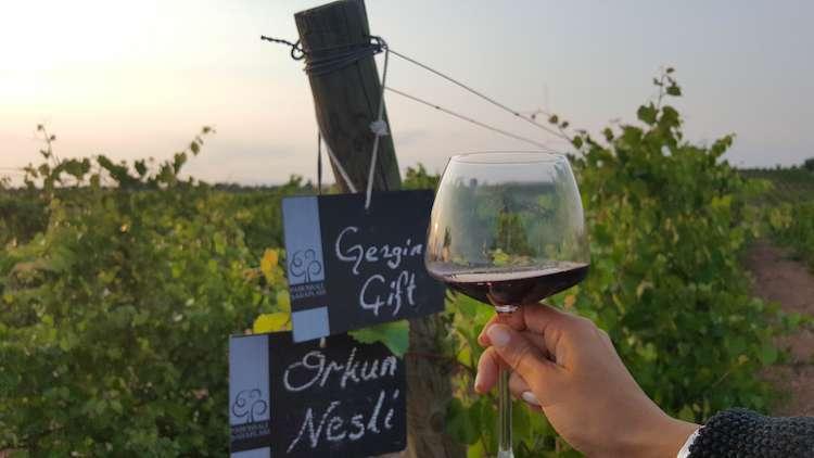 pamukkale şarapları7