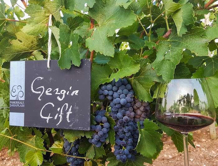 Pamukkale Şarapları Bağbozumu