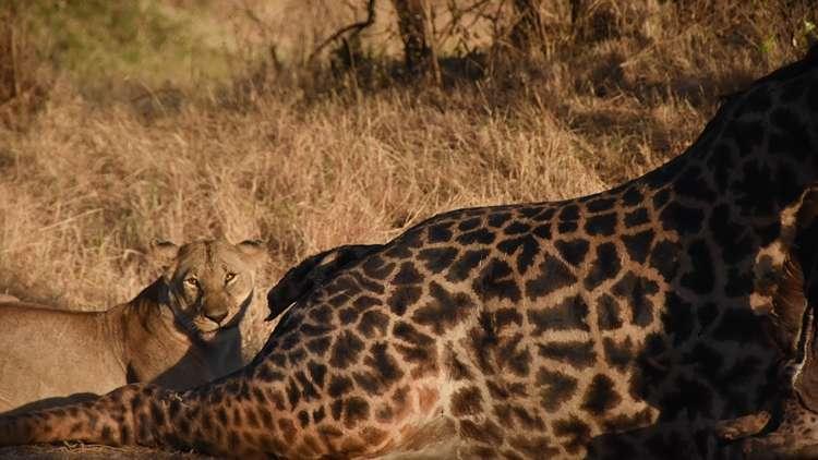 afrika safari turu