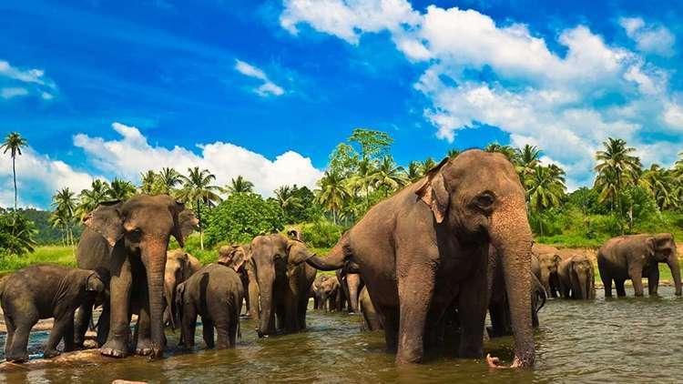 Sri Lanka Gezilecek Yerler Sri Lanka Turu