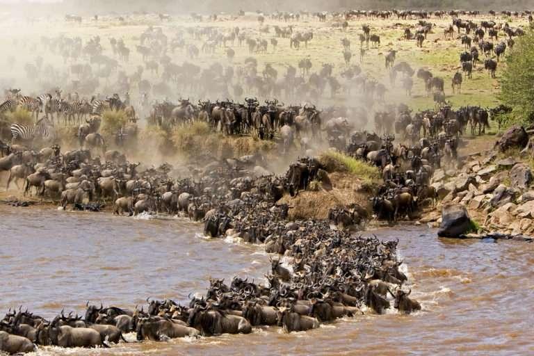 kurban bayramı afrika safari turu2