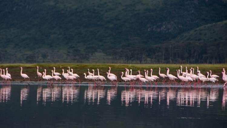 Nakuru Gölü Gergedan ve Flamingolar