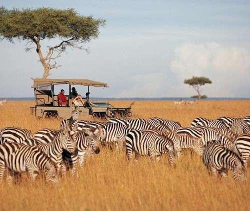 Afrika Turu Masai Mara Safari Zanzibar Adası