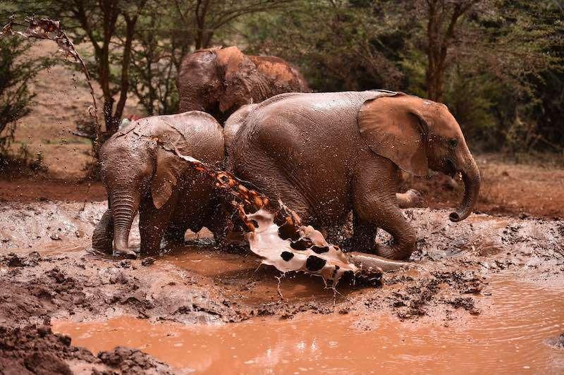 afrika safari botswana