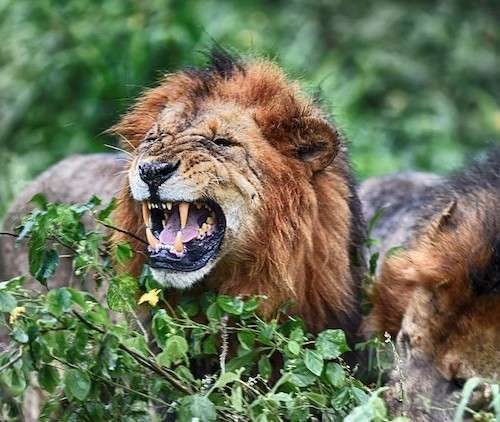 Afrikada Safari Turu – FULL REHBER