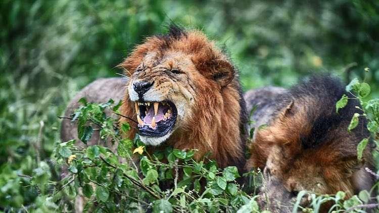 afrikada safari turu