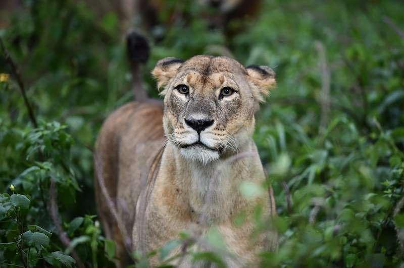 Masai Marada Safari Turu