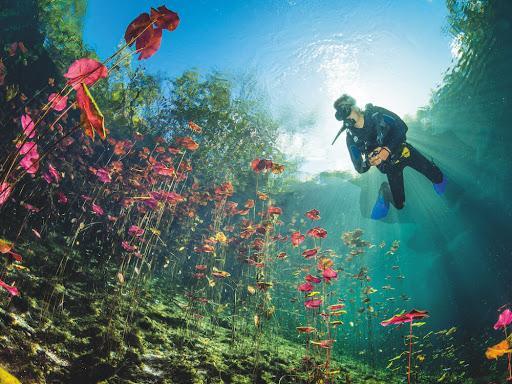 Meksika cenote carwash
